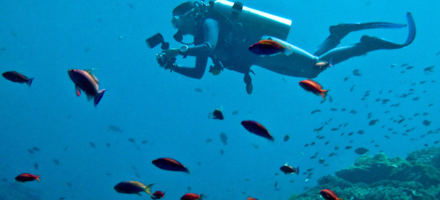 Top Dive Sites Around the World. Photo by Ilse Reijs and Jan-Noud Hutten