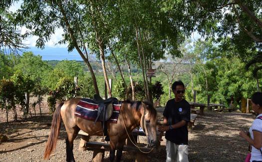 Shankar S, Horse riding on Baker's Hill, via Flickr CC BY 2.0