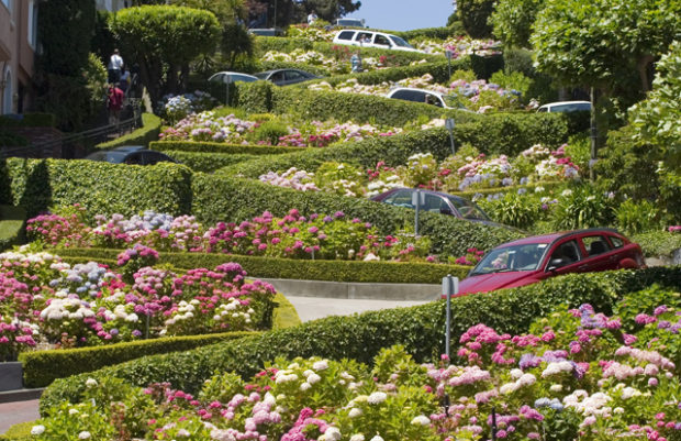 Flowers featured on Lombard Street in San Francisco