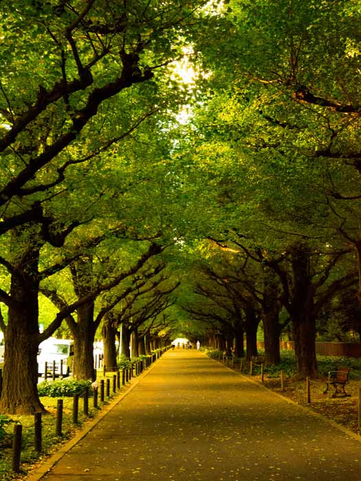 De-stress with a quiet stroll through Meiji Jingu. Photo by Yoshikazu TAKADA